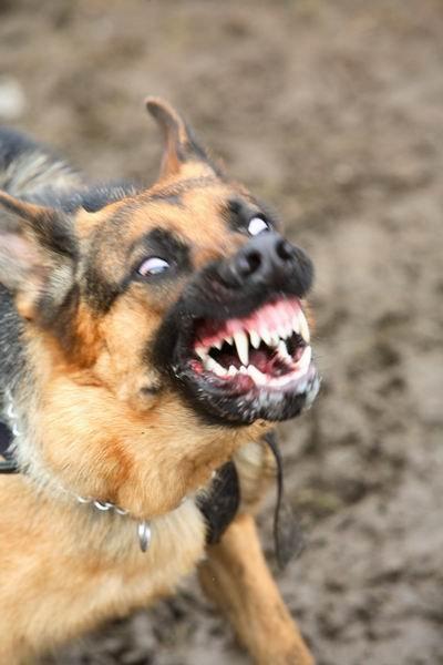 Собаки-зомби в кинематографе